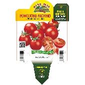 Pachino Cherry Tomato  - Orto mio