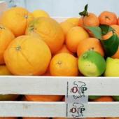 Citrus fruits of SicilyRibera wooden crate - Ag. Company  Guarraggi 6 kg. Oranges for juice 6 Kg. Oranges Fioroni Washington 3 kg. Clementine 2 kg. Natural Lemons