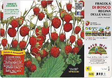 Wild strawberry Plant - Orto MIo