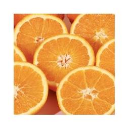 Juice oranges  of Sicily Ribera