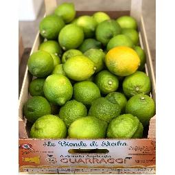 Sicilian lemons Di Ribera