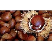 Italian Chestnuts