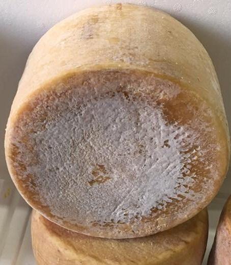 Pecorino Sardo con caglio vegetale - Dolce di cardo stagionato 9 mesi -  Azienda Agricola Mureddu Aru