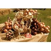 Cipolla (onion) di Cannara in treccia
