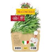 TARRAGON - Pot plant 14 cm - Orto mio