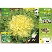 Blonde Endive Salad - Orto mio