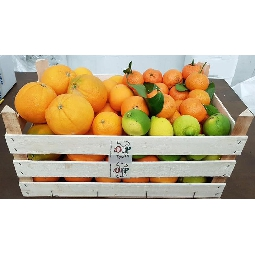 Citrus fruits of Sicily Ribera  wooden crate - Ag. Company  Guarraggi