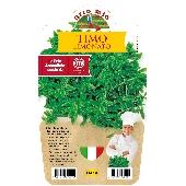 Timo Lemonade Pot Plant 14 cm.  - Orto mio